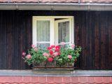 Renowacja okien drewnianych.